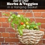 How to Grow Herbs and Veggies in Hanging Baskets