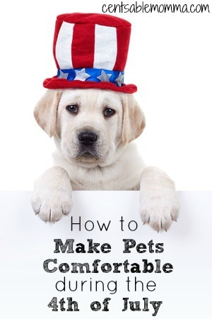 Fireworks and the 4th of July are synonymous.  However, the loud noises of fireworks can make your pet uncomfortable.  Check out these 4 tips for how to make your pets comfortable during the 4th of July for ways to help the pet anxiety.