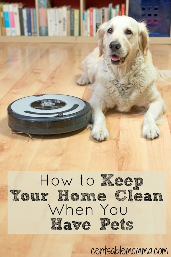 How To Keep Your Home Clean When You Have Pets Centsable